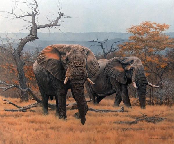 Johan Hoekstra Wildlife Art Collection Of