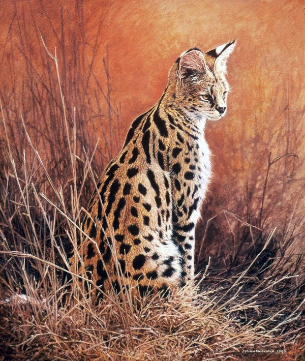 Serval Johan Hoekstra Wildlife Art Collection