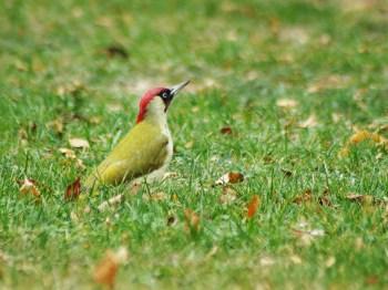 Gesang in der Stille – Die Vogelwelt auf unserem Trinitatisfriedhof