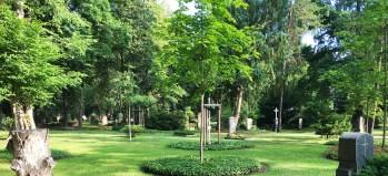 Tännicht – die Baumbestattung auf dem Friedhof in Dresden