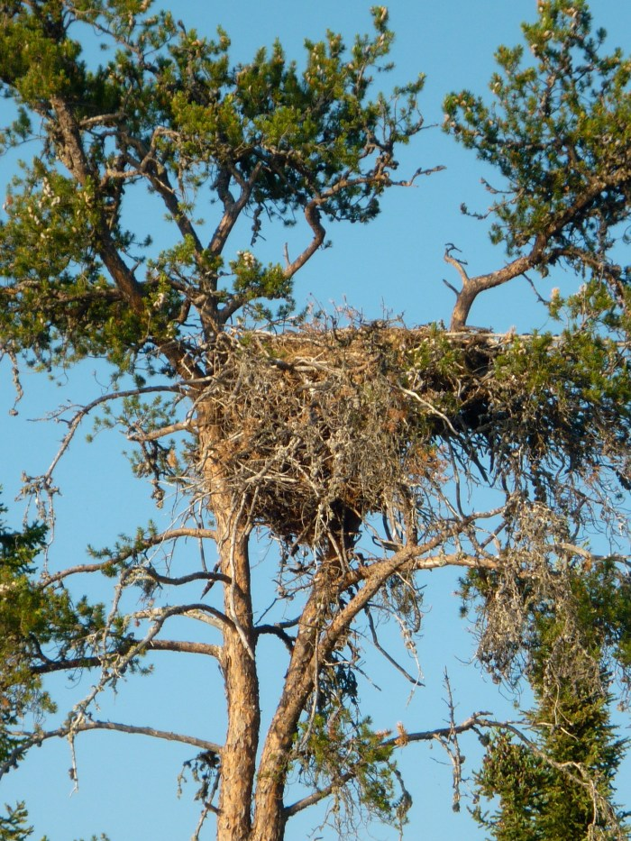 Close up of the nest - we couldn't tell if it had chicks in it or not