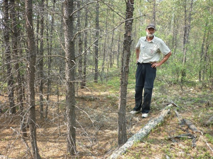 Site of the old cabin at the eastern end of the portage out of the Blondeau River, the log by John's feet marks the base of the west wall, smaller trees are now growing in the depression where the cabin had been dug out for the floor, a rusty tin can was perched on a stump close by