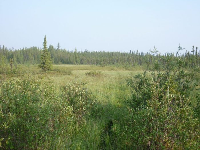 Start of the floating bog section of 'Muskeg Portage', 300 metres west of un-named lake #5