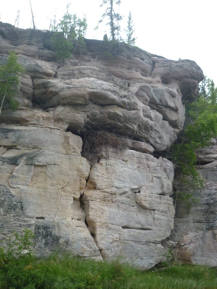 Golden Eagle nest high above the river on the sandstone cliffs