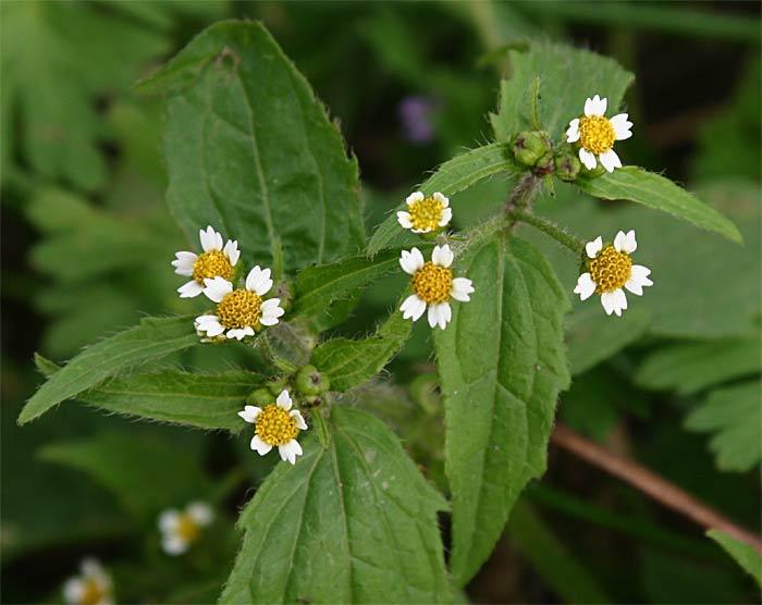 Kamerplanten en bloemen  Mensensamenlevingme