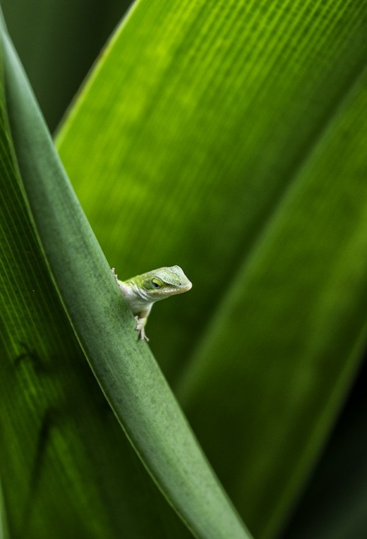 Gecko Through my eyes