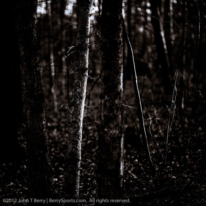 November/28/12:  Landscape