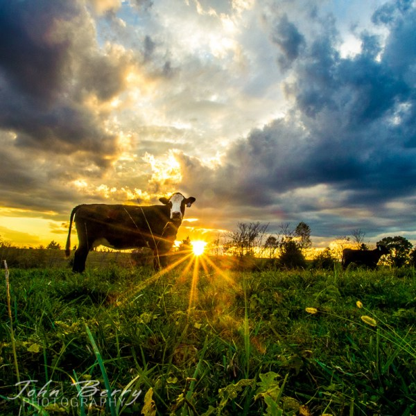 Farm Landscape - Reverse