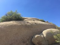 a couple of grey squirrels go rock climbing