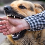 Dog Bite Attorney | Personal Injury Lawyer John B. Jackson