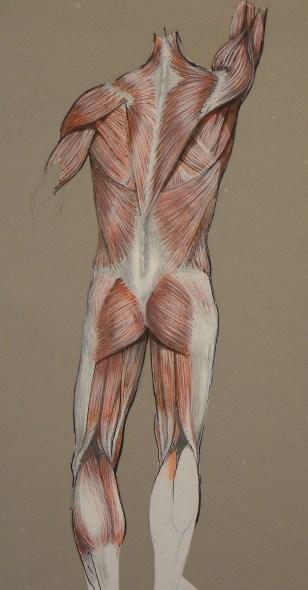 anatomical illustration 1