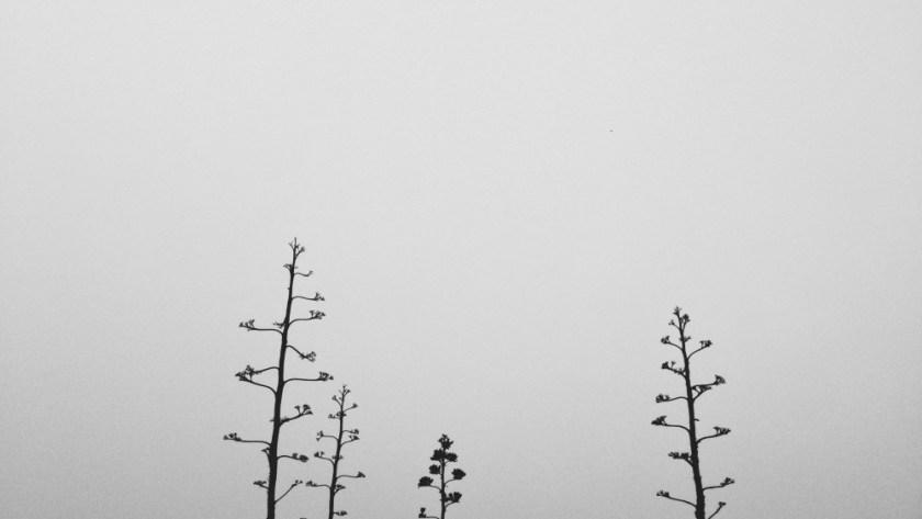 black and white vsco iphone 5 image california