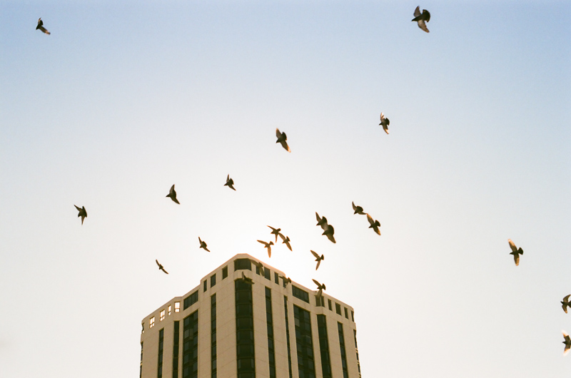 Nikon F100 film photo birds flying