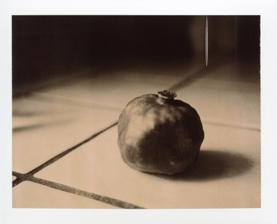 Polaroid 360 pomegranate photo