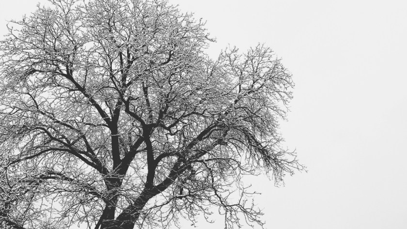 snowy tree black and white vscocam iphone denver