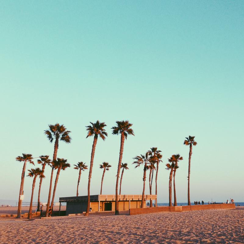 beach bathroom palm trees
