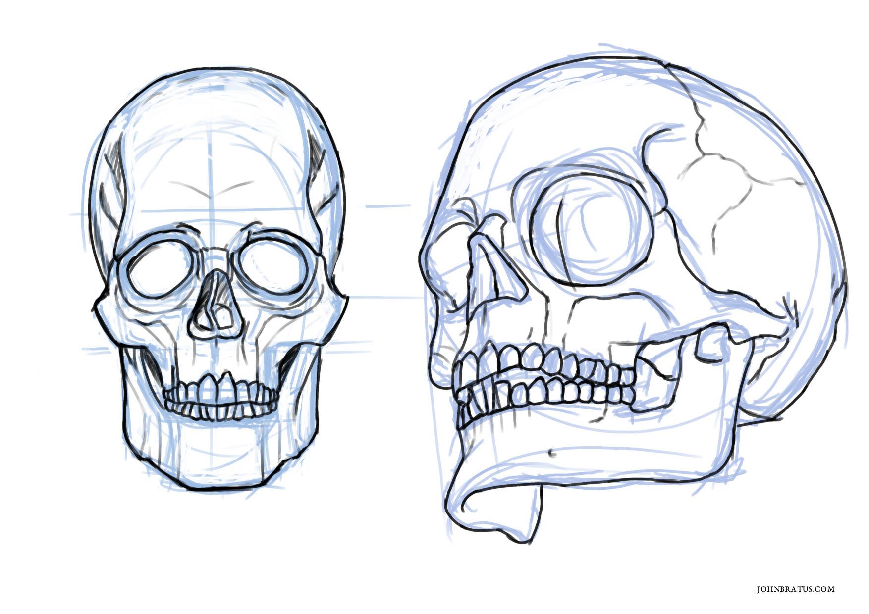 Digital sketch of a human skull