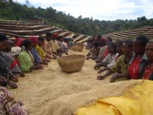 Ethiopia - John Burton Ltd NZ - opt