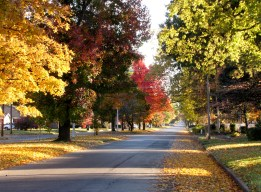 Paducah's Jefferson Street in Fall