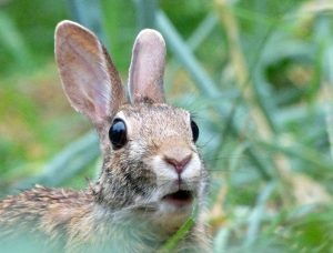 Rabbit_Looks_Surprised_by_Monique_Haen
