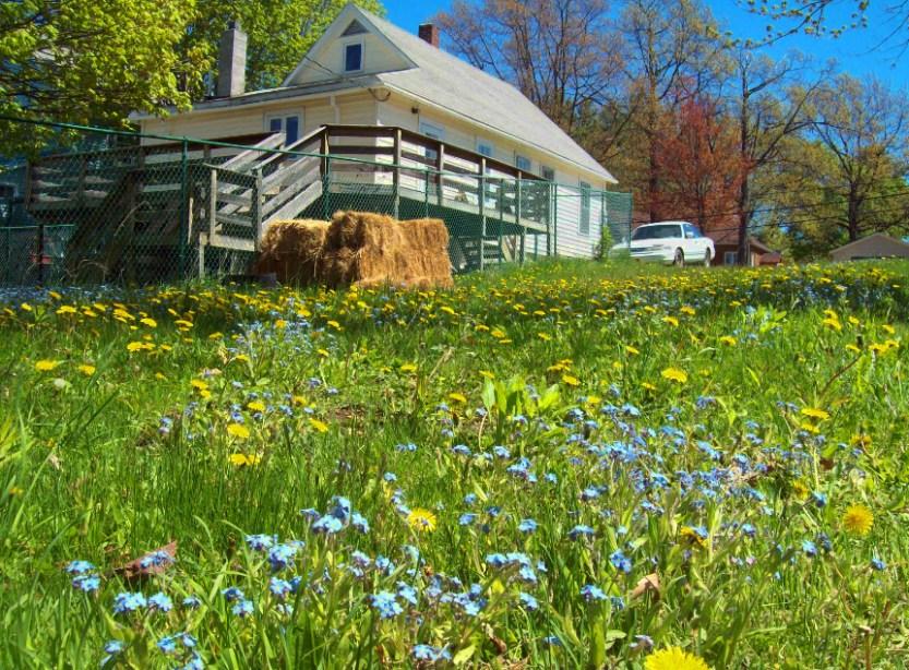 back-yard-flowers-306-s-steel-ontonagon-up-michigan