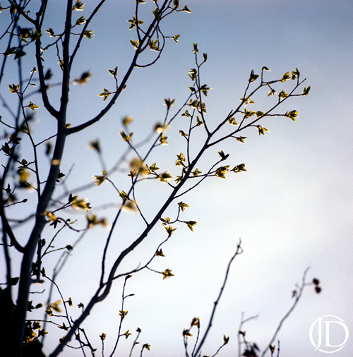 Blossoms - $1100 - 12x12 Kodak Film Color C Print in 18x18 frame - Edition of 10