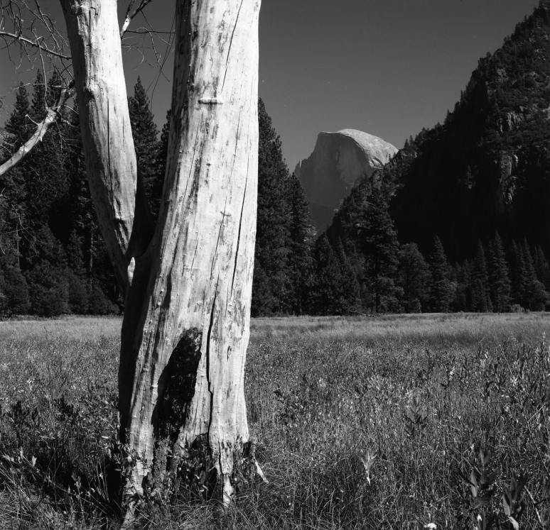 9-1999 Yosemite Valley-Hasselblad-80 Planar-G filter-T-max 100 film-PMK Pyro developer.