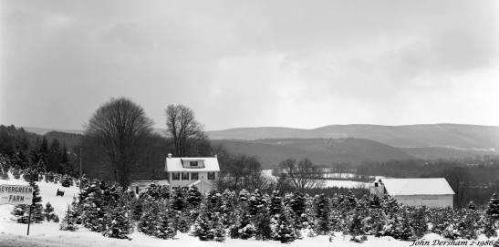 2-15-1986 Evergreen Farm, Christmas trees-Northeast Pennsylvania-Linhof Technika V 4x5 camera- 150mm Schneider Symmar S lens-Kodak Tri X Pan Pro 4x5 film-Kodak HC110B developer-last photo trip before moving out of Phildelphia Pennsylvania.