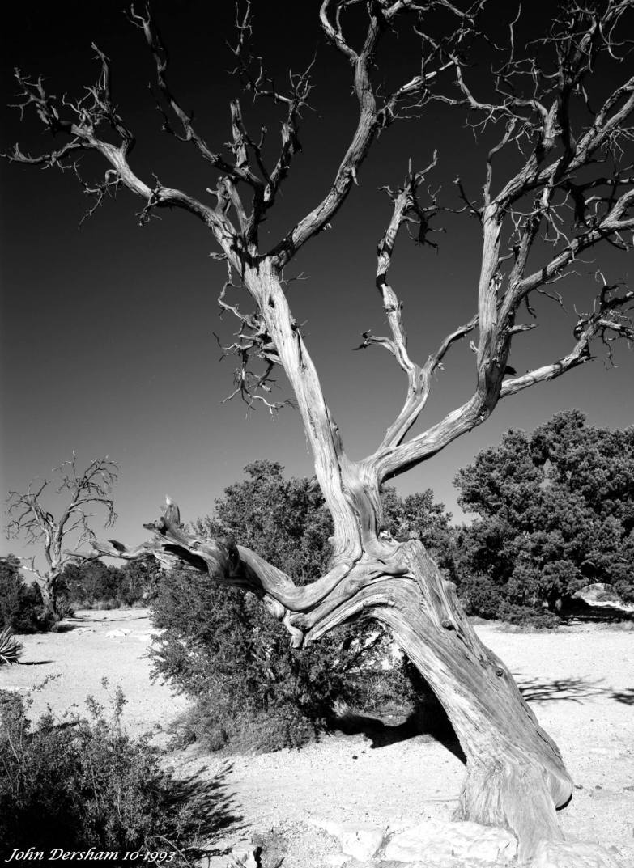 10-1-1993 Grand Canyon-South Rim-Linhof Technika V 4x5 camera-90mm Schneider Super Angulon lens-G filter-Kodak 100 4x5 film-PMK Pyro developer.