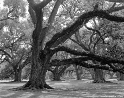 9-8-1994 Oak Alley Plantation Vacherie Lousianna-Linhof Technika V-150mm Schneider Xenar lens-Kodak Super XX 4x5 film-PMK Pyro developer.