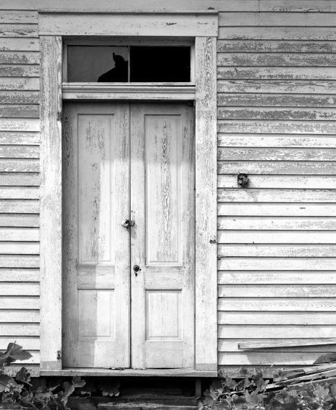 1993 Alabama-Linhof Technika 4x5 camera-210mm Schnieder Apo Symmar-Kodak Tmax 100 4x5 film-Kodak Tmax RS developer.