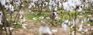 Battlefield, Cotton, by John Dowell artist photographer