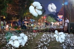 The Market, Cotton, by John Dowell artist photographer