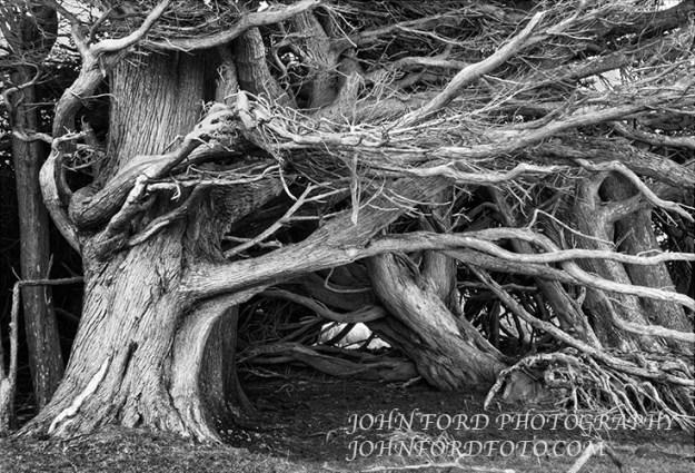 0446CATLIN TREE AKVIS copy