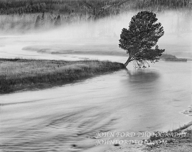 A year after the great fire of 1989 I found this tree leaning over the Firehole river not far from Old faithful lodge.