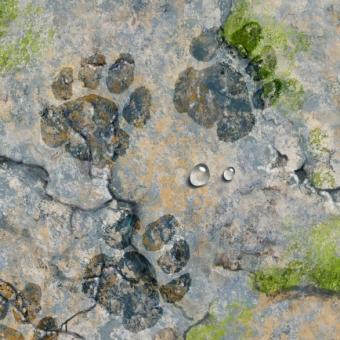 illustration by John Fraser of rock terrain with wet pawprints, pawprints, animals, footsteps, rough terrain, rock landscape
