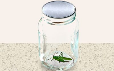 What Can We Learn From Grasshoppers?