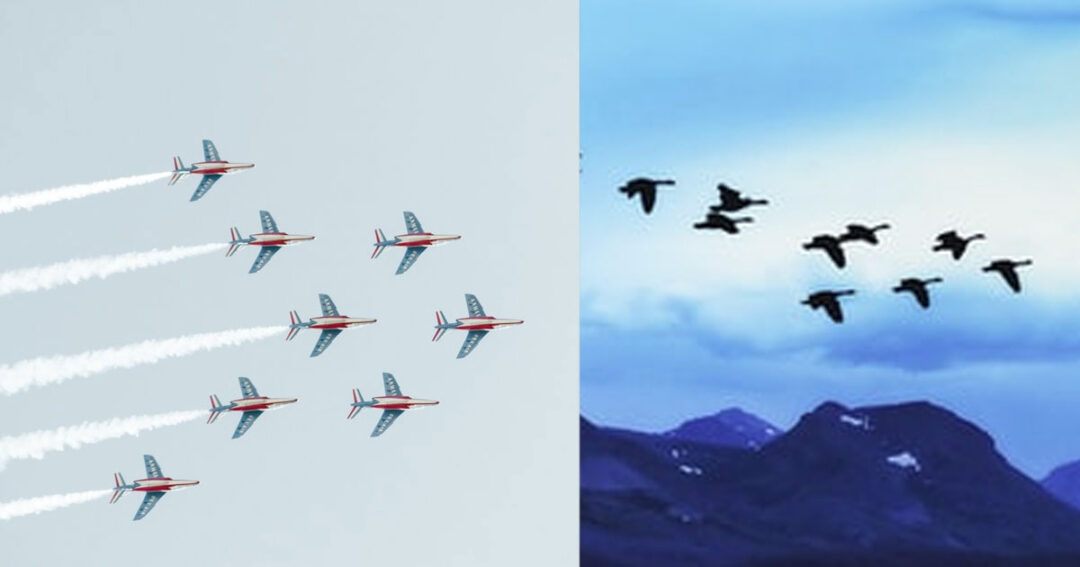 Learning From Those Flying Geese?