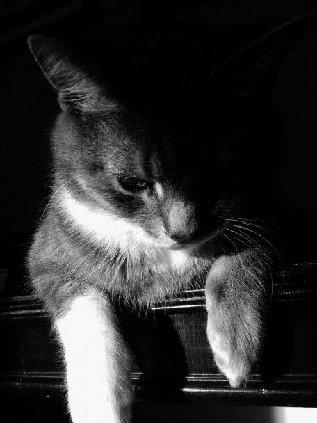 Cat in sunlight