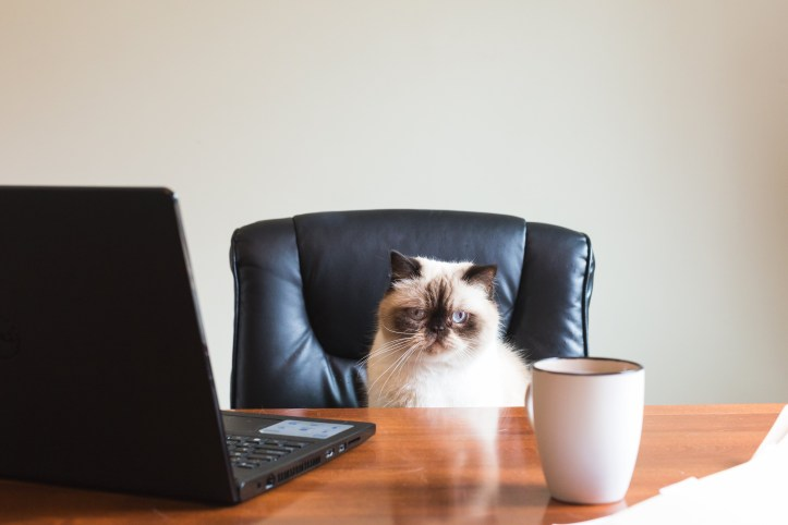 business-cat-in-office_4460x4460