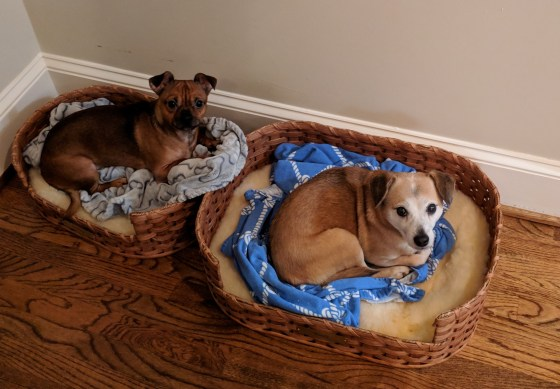 Sammy and Buddy Bed