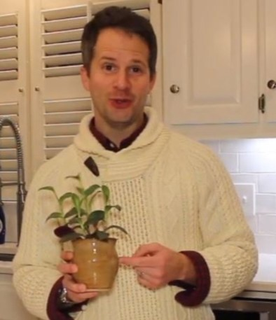 How to Root Plants