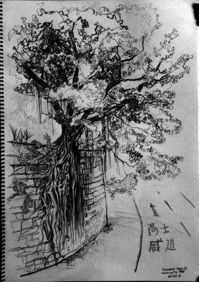 02-22-11-mangrove-tree-causeway-bay