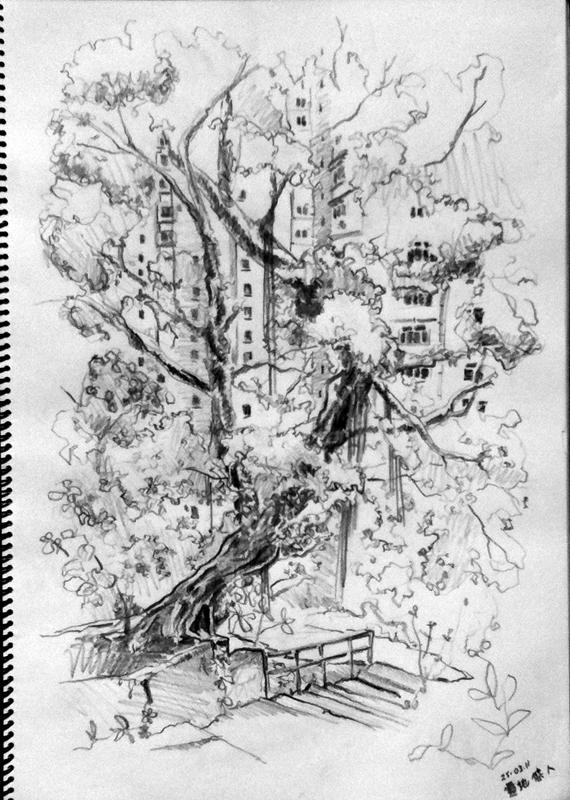 03-25-11-banyan-tree