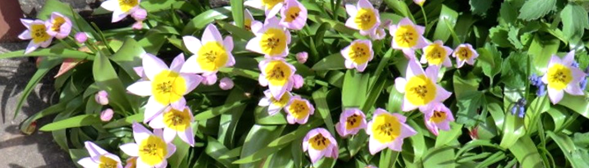 John-Horsey-Horticulture-gardening-courses