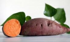 sweet-potato-carolina-ruby_MED