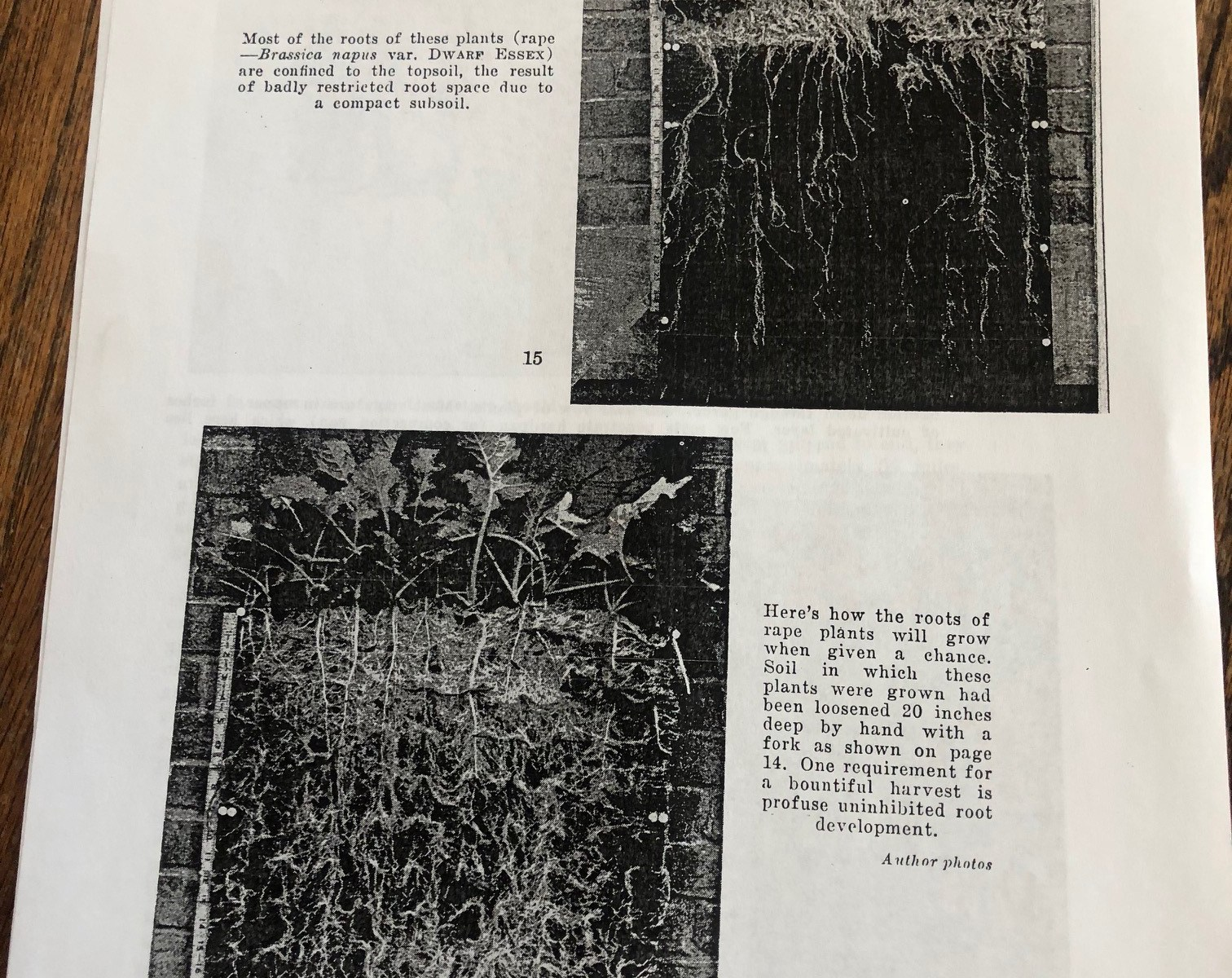 """These images are from the section """"Living Quarters for Plant Roots—A Picture Story of How Soil Conditions Determine Root Development"""" by Henry C. De Roo"""