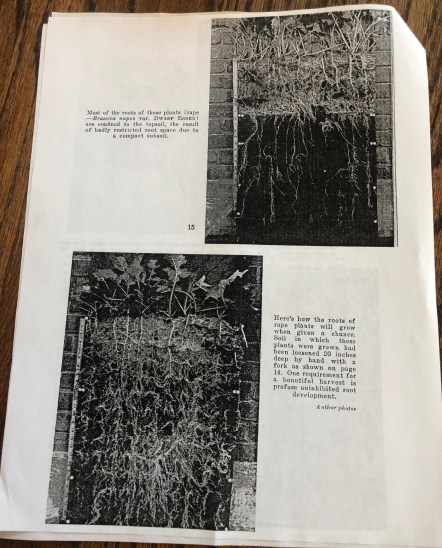 "These images are from the section ""Living Quarters for Plant Roots—A Picture Story of How Soil Conditions Determine Root Development"" by Henry C. De Roo"