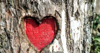 heart in tree
