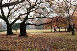 Autumn is ending - Tokyo.